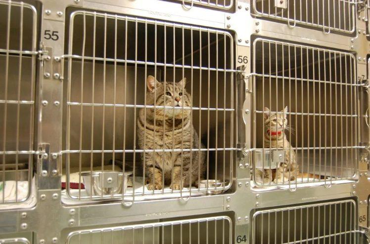 Хозяин своего пропавшего кота увидел в новостях, который попался на воровстве собачьих кормов