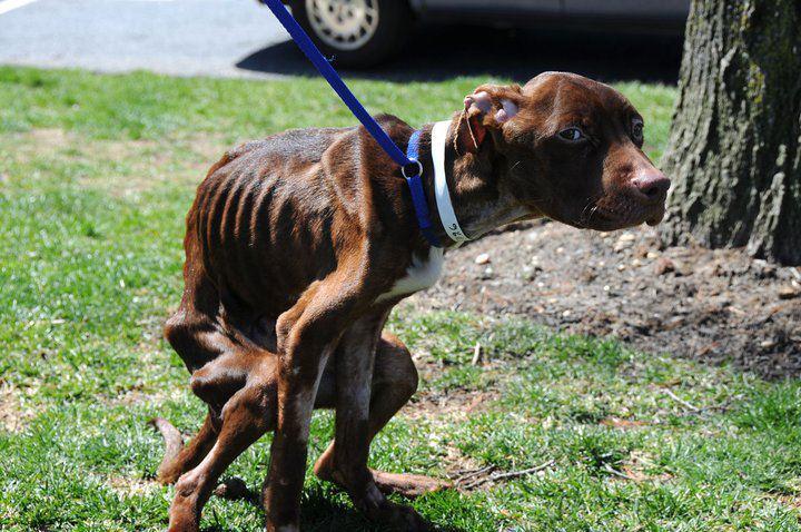 В мусорном мешке на улице нашли собаку