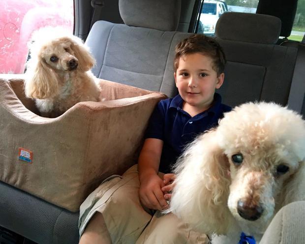 Приемный сын пары, хотел взять пожилую собаку из приюта