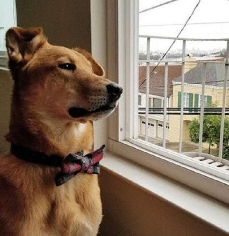 Собаку отдали в приют, за то, что была невоспитанной, а от тоски она стала терять шерсть, худеть и выть