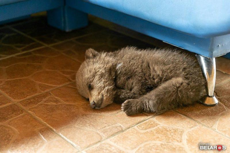 Фермер спас маленького медвежонка, он стал жить у него на ферме