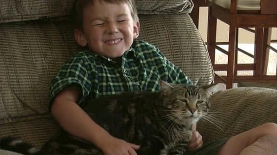 Есть дети, которых спасли героические коты