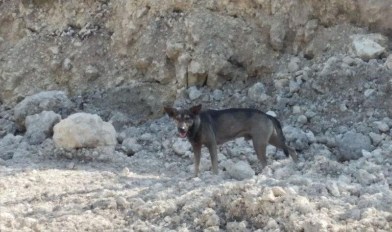 Собака нашла в горах младенца. И привела туда человека