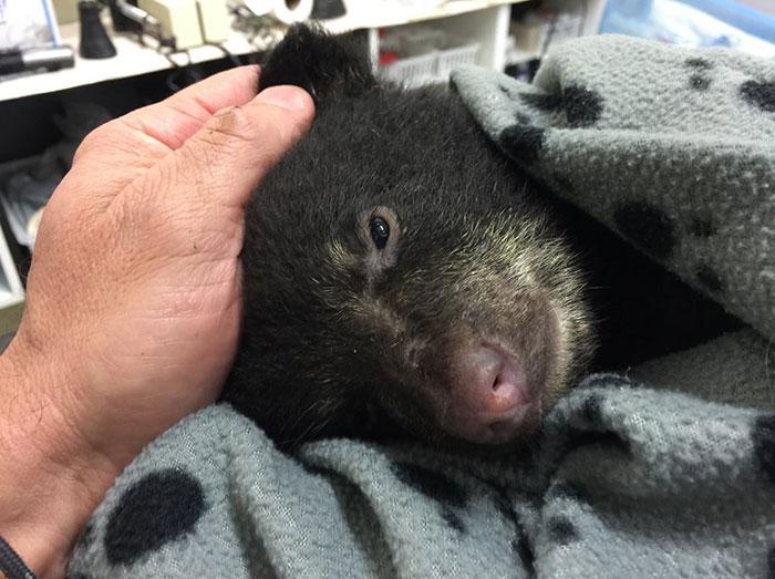 Спас медвежонка, но мог попасть за решетку
