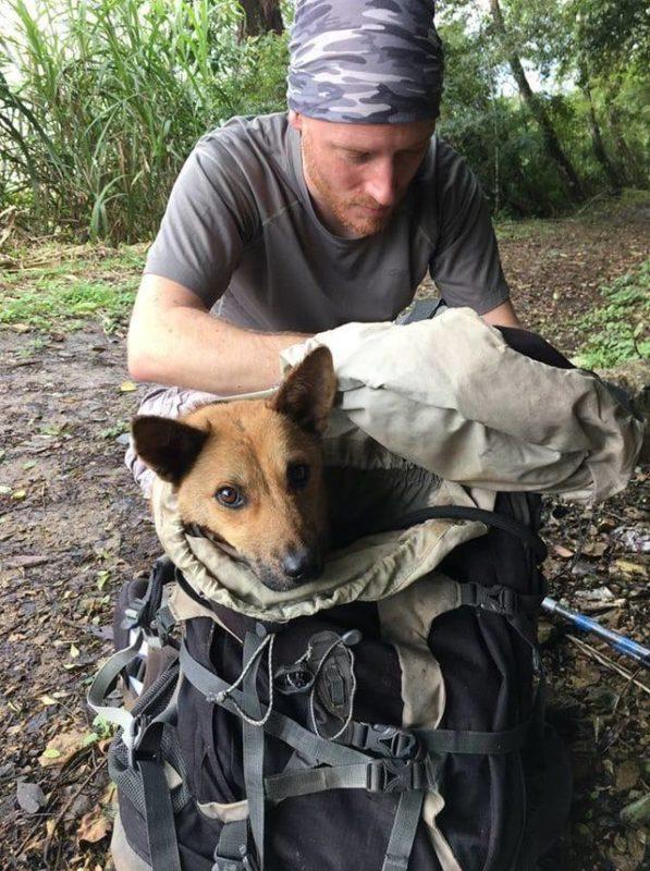 Раненую собаку, спас мужчина рискуя своей жизнью